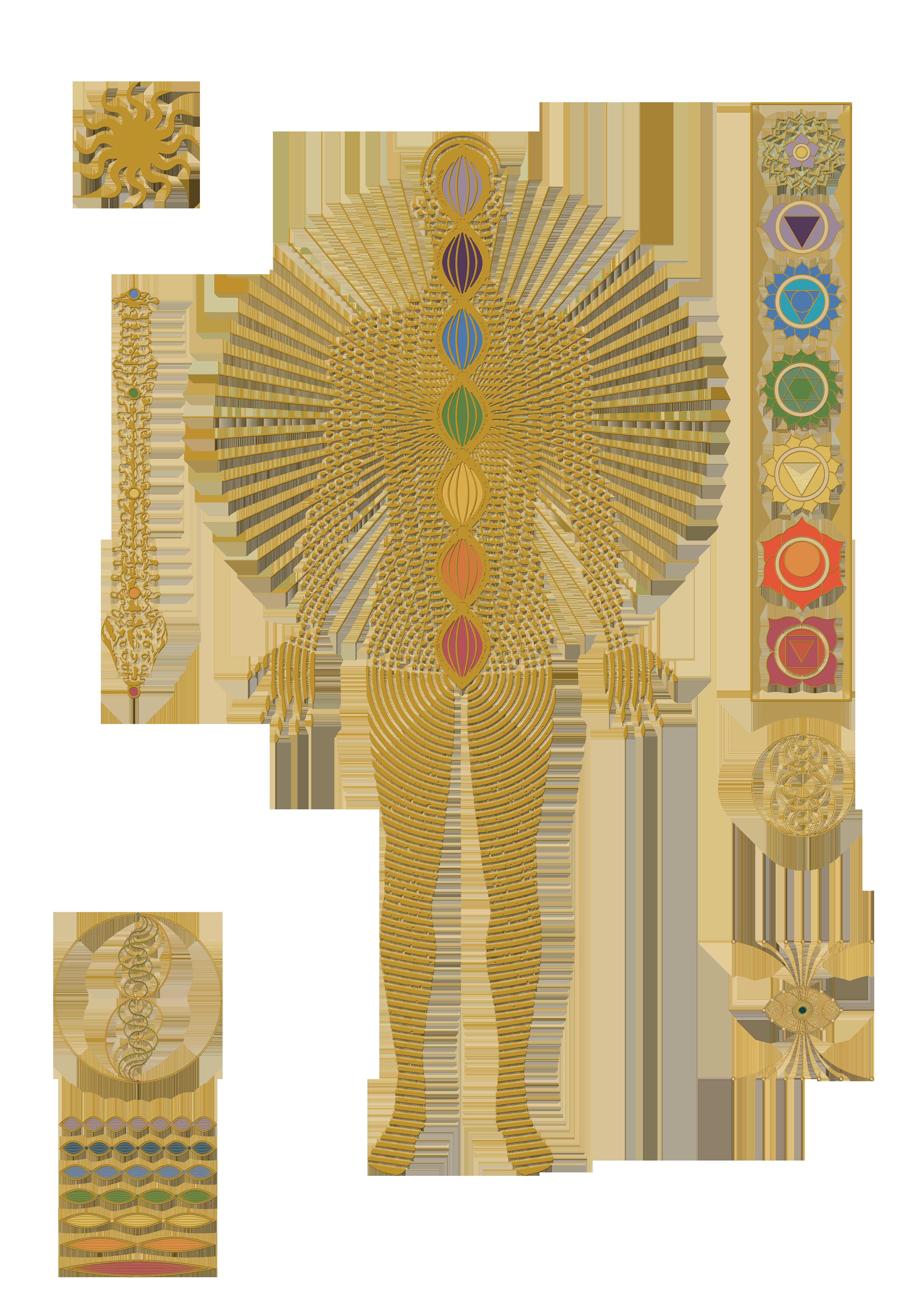 Kundalini chakra anatomy